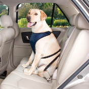 red and blue dog car harnesses