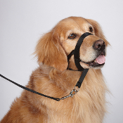 training head collar
